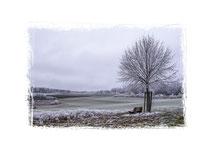 Winterlandschaft im Hegau 2215