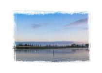 Halbinsel Höri - Moos 4905