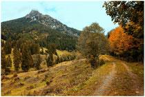 Landschaft im Tannheimer Tal - Tirol 0968