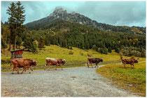 Landschaft im Tannheimer Tal - Tirol 0980
