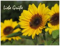 Sonnenblume 1548