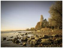 Radolfzell - Halbinsel Mettnau 5029