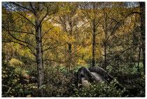 Donautal - Steinbrücke bei Beuron 6922