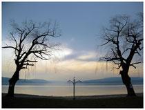Bäume Reichenau 3380