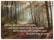 Herbstwald-Lichtblick
