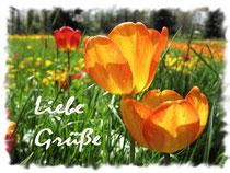 Tulpen 4280a