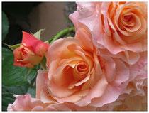 Rose 9821