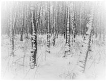 Bäume 6979