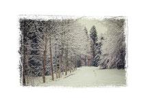 Winterlandschaft im Hegau 7725