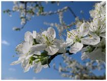 Blüten 6092