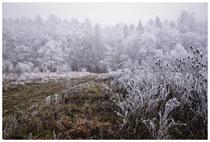 Winterlandschaft im Hegau 2103