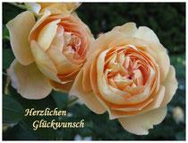 Rose 5837