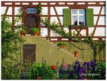 Insel Reichenau 9550