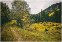 Landschaft im Tannheimer Tal - Tirol 0967