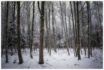 Winterwald 2268