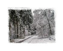 Winterwald 0654