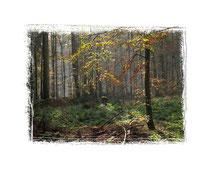 Herbstwald 9405