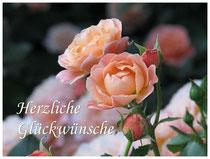 Rose 0495