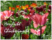 Tulpen 6272