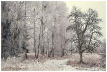Winterlandschaft bei Stockach 2414