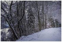 Winterwald 2280