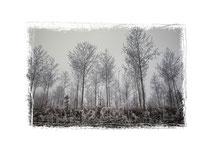 Wald bei Nebel und Raureif 2165