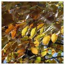 Herbstlaub 3653