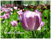 Tulpen 2049