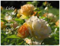 Rose 0494