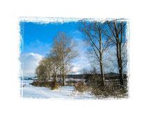 Pappeln im Winter 0001