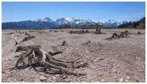 4144 Baumstümpfe im Forggensee bei Füssen