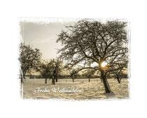 Obstbäume 2392