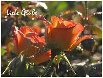 Rose 0834