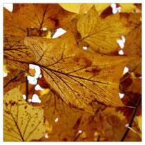 Herbstlaub 2864