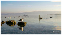 Bodensee 4923