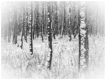 Bäume 6984