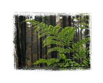 Herbstwald 9391