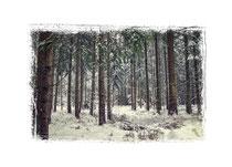 Winterwald 7741