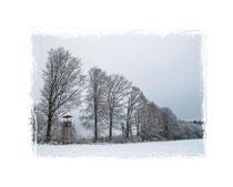 Winterwald 0690