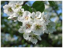 Blüten 6044