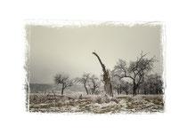 Winterlandschaft im Hegau 2534
