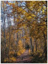 Waldweg im Herbst 6967