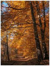 Herbstlicher Waldweg 6949