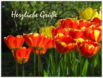 Tulpen 8901
