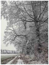 Waldweg mit Raureif 2156