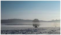 Baum im Schnee 0131