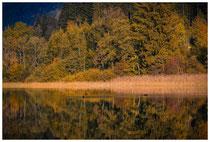 1138 Herbststimmung am Bannwaldsee
