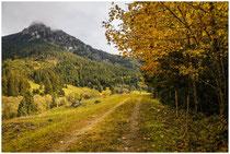 Landschaft im Tannheimer Tal - Tirol 0970
