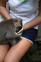 am IPhone hatten die Affen auch schon Interesse!