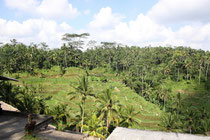 Bei den Reisfeldern